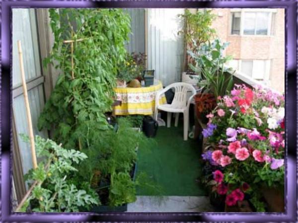 Озеленяем балкон.